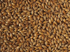 Cara Gold crisp malting caramel malt with 12 - 16 ebc when you want to brew beer at home