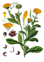What's the Scoop on Calendula?