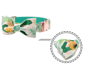 Dog Collar & Cat Collar - Summer Tropics Designer Collar, Lead and Bowties for Dogs & Cats - The Paw Empire