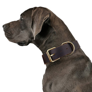 Genuine Leather Pet Collars-  XS to XXL Dog Collars - The Paw Empire