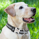 Personalized Dog Collar & Cat Collar- Reflective Custom name plated Collars