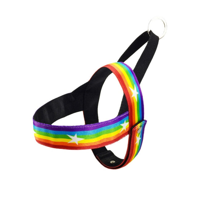 Funky Colorful No-Pull Dog Harnesses & leads- Adjustable Pet Harness with Handle and leashes - The Paw Empire