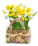 SOLD OUT Delightful Daffodils Bulb Gift
