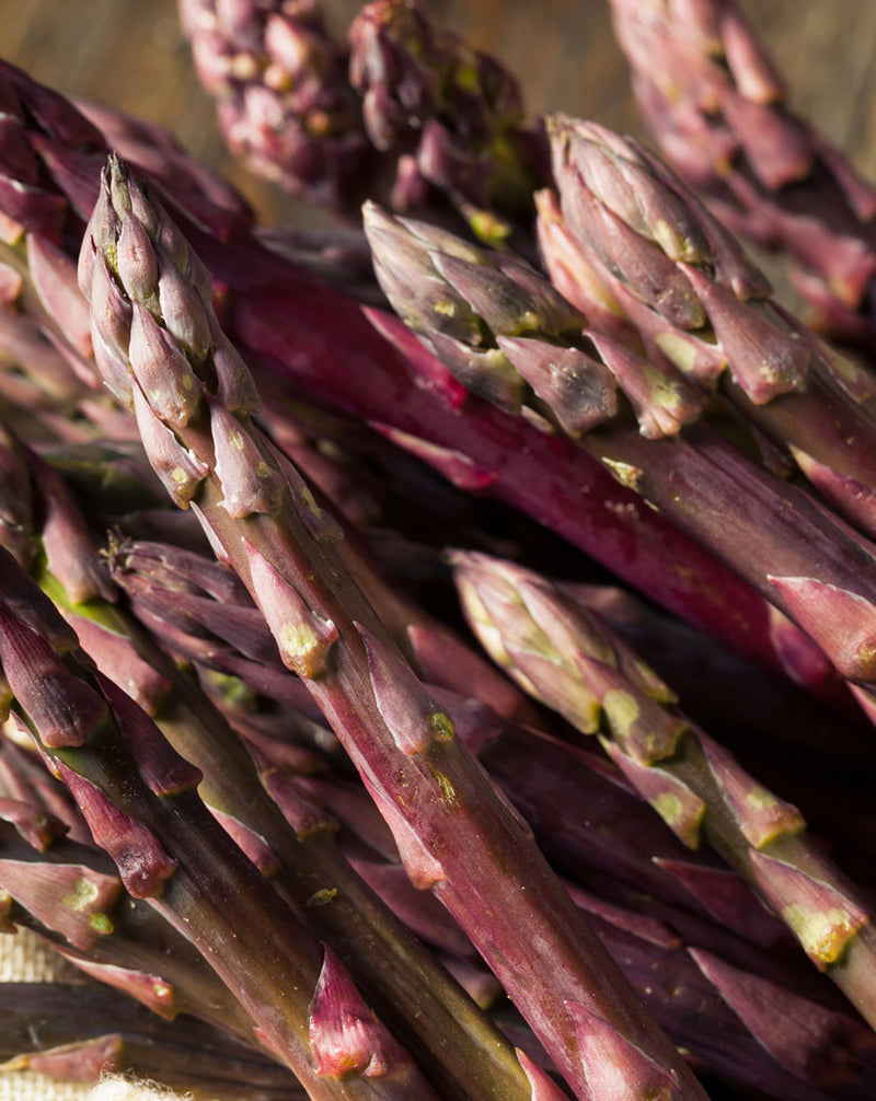 Purple Passion Asparagus Crowns - 10 root divisions