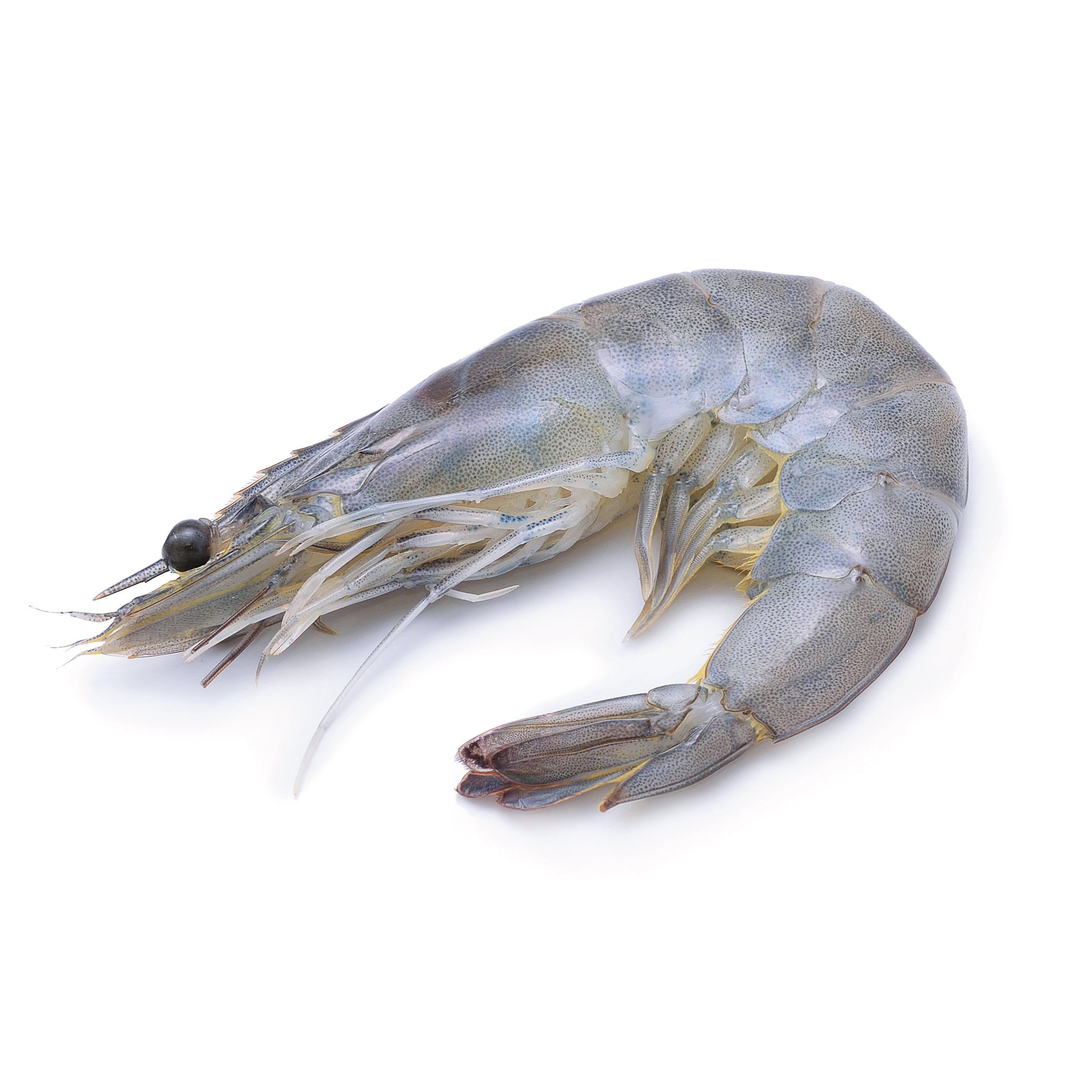 Seafood—Prawn Head-on Shell-on 31 to 35 pieces (1kg)