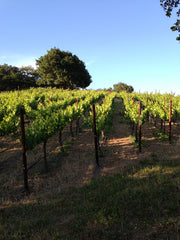 Mathis Vineyard - Early Morning, Grenache, Sonoma Valley