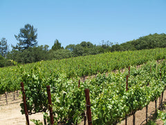 Mathis Vineyard, Sonoma Valley, California