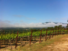 Mathis Vineyard, Sonoma Valley, morning fog