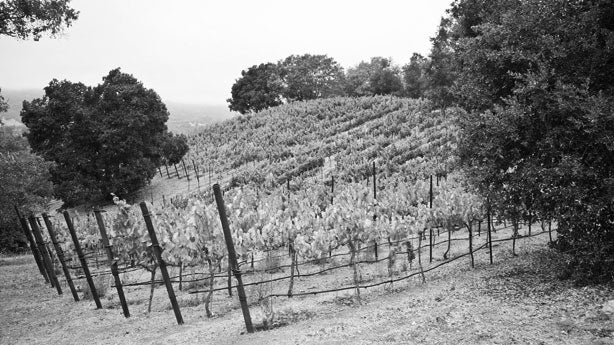 Mathis Vineyard, Sonoma Valley, California, Mathis Grenache, trees