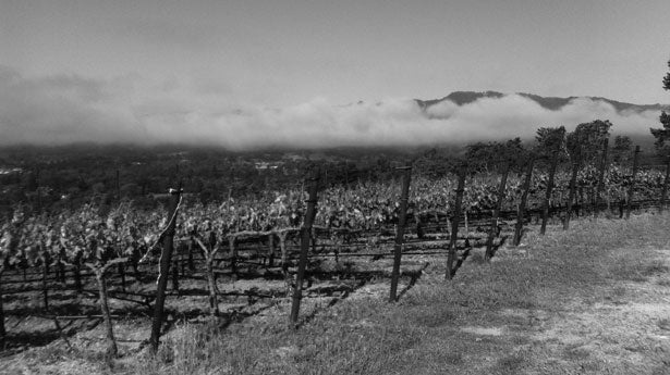 Mathis Vineyard, Sonoma Valley, California, Mathis Grenache