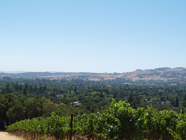Southwest Sonoma Valley below the vineyard
