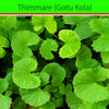 Indian Pennywort (Gotu Kola) : Herbs - Mangalore Spice