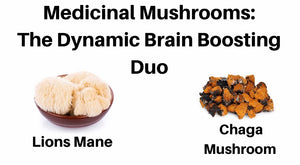 Medicinal Mushrooms: The Dynamic Brain Boosting Duo