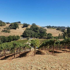 Theopolis Vineyards - Petite Sirah - CA