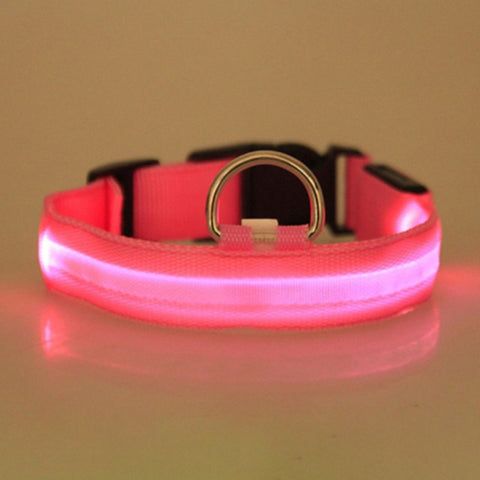 Image of Nighttime Led Collar