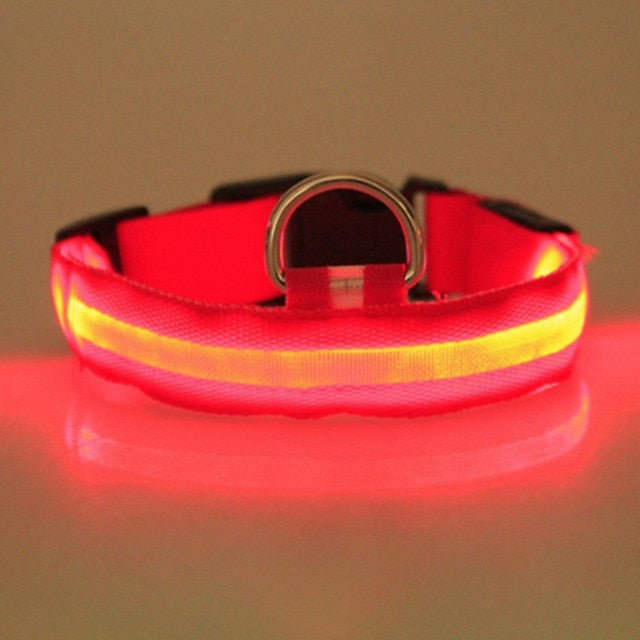 Nighttime Led Collar