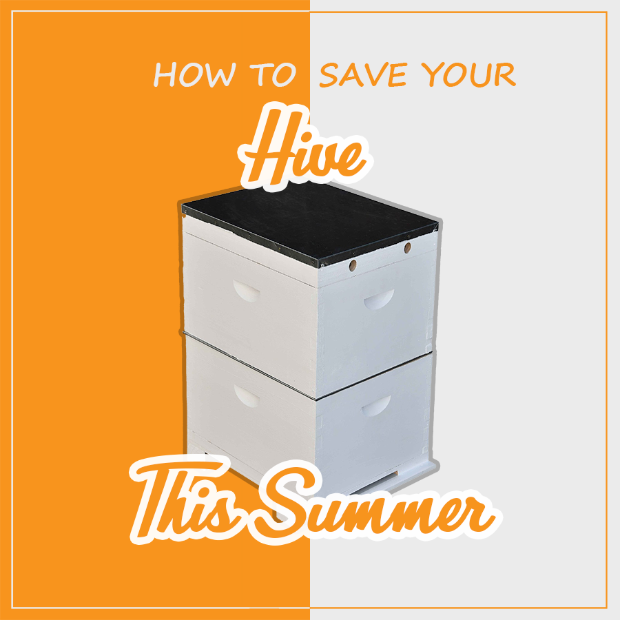 How to save your hive in summer