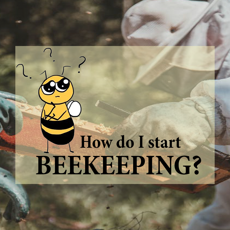 An introduction for starters to Beekeeping