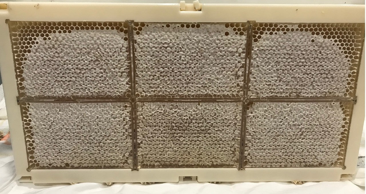 Honeycomb Full Depth Beehive Frames with Honeycomb Boxes