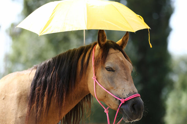 How to Protect Your Horse In Hot Conditions