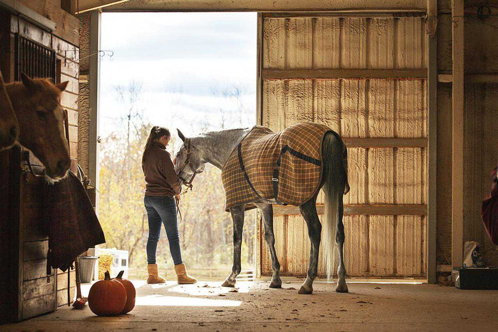 What To Do While Waiting For The Vet If Your Horse Has Colic