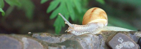 snail above a wet stonewall