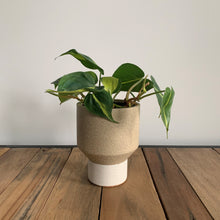 "Load image into Gallery viewer, Funnel Planter - One Off Limited Release (1 x 4"" Available)"