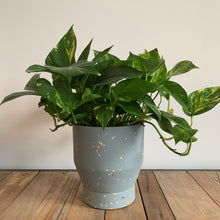 "Load image into Gallery viewer, 7"" Funnel Planter - Cerulean Terrazzo"