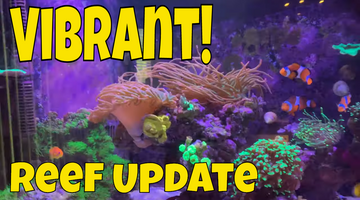 Reef Aquarium Update - July, 2019