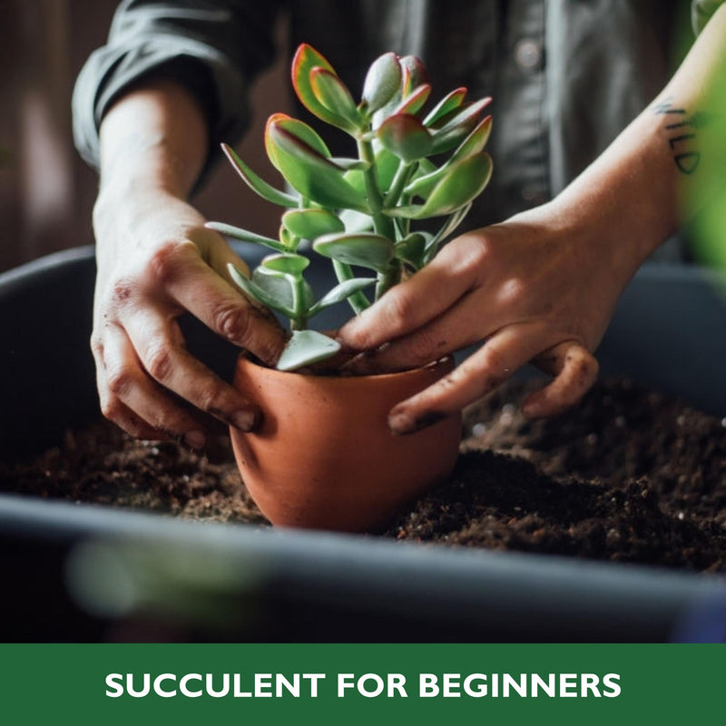 Succulent Plants: Gardening for starters!