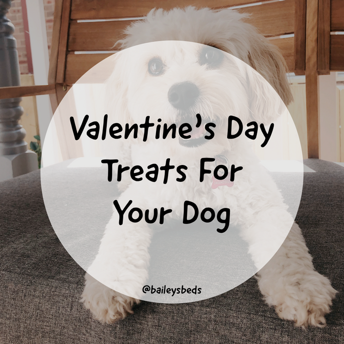 The Ultimate Valentine's Day Treats Recipe for your Dog!