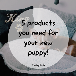 Be prepared for the arrival of your new puppy with Bailey's 5 must-have products!