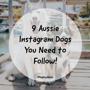 9 Instagram Dogs from Australia You Need to Follow Right Now!