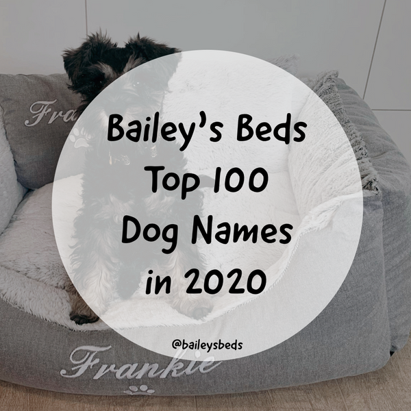 Bailey's Beds Top 100 Dog Names of 2020