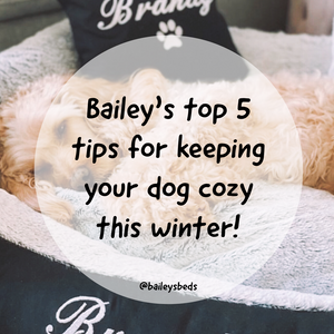 Is your dog feeling the cold? Bailey's top 5 tips for keeping cozy this winter!