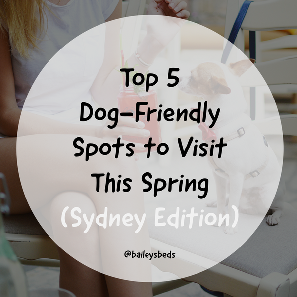 Bailey's top 5 dog-friendly spots to take your pup this Spring (Sydney Edition)