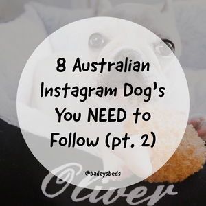 8 Instagram Dogs from Australia You Need to Follow Right Now! (Part 2)