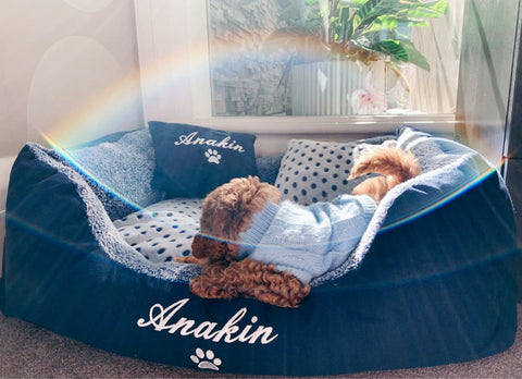 Blue Spot Personalised Dog Bed, Cavoodle, Anakin