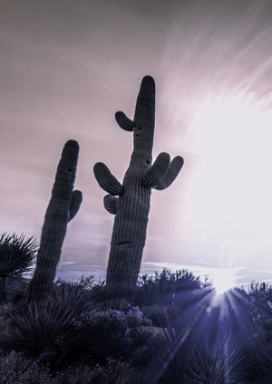 SUNSET CACTUS - HONEYMOON HOTEL