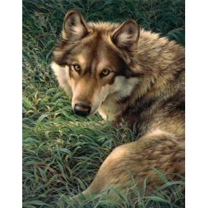 Gray Wolf Queen Size Plush Raschel Blanket 79x95