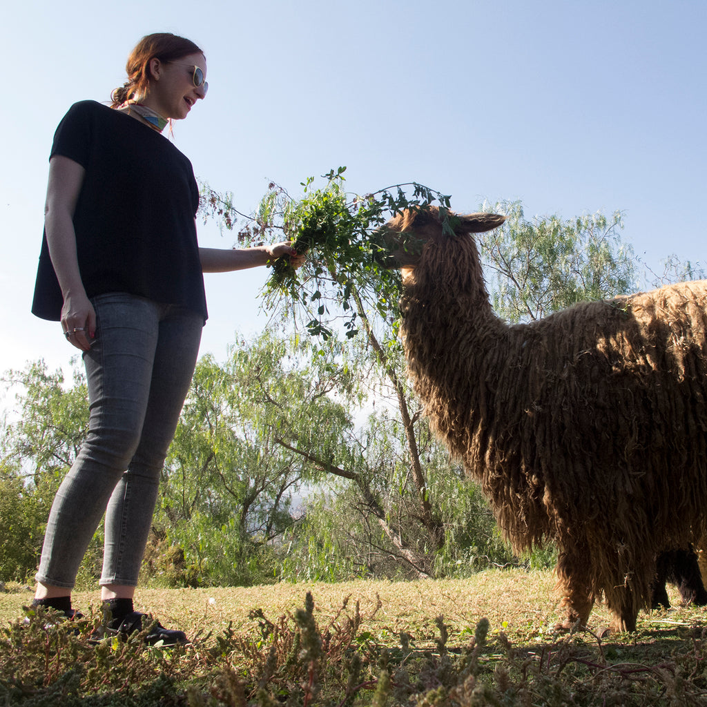 The Wunder Fiber: Alpaca
