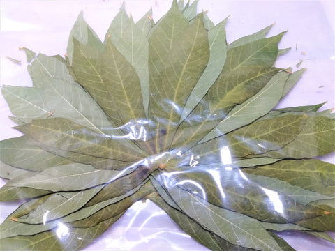 10 Large Cassava Leaves
