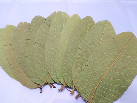 10 Guava Leaves