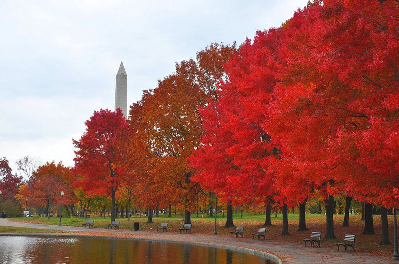 The Best Fall Foliage in the DMV