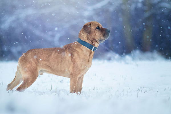 Winter Getaways with your Dog