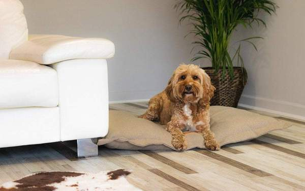 Four Canine Trends for 2019: From Leather Dog Beds and Fancy Dishware to Innovative Tech