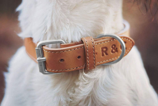 Leather Dog Collar - Trieste
