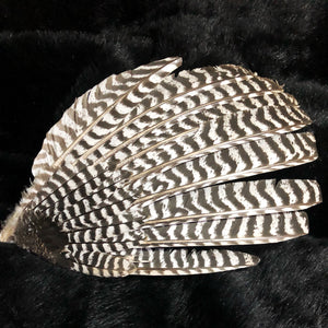 "Turkey Feather ""Wing"""
