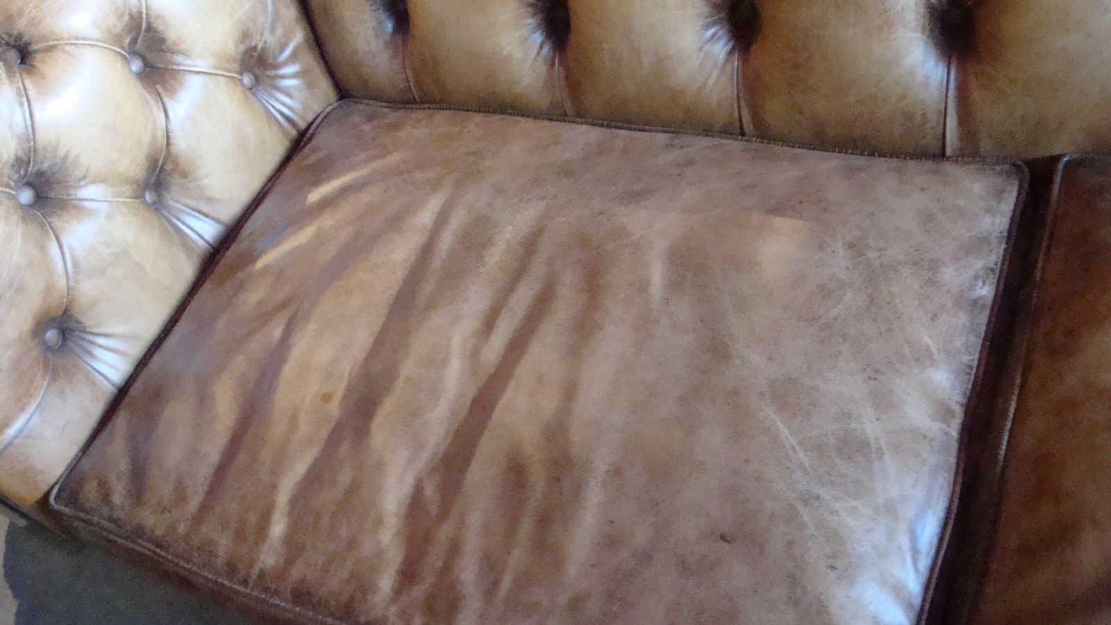 Antique Buffalo Leather Sofa Chesterfield Style Button Tufted 96""
