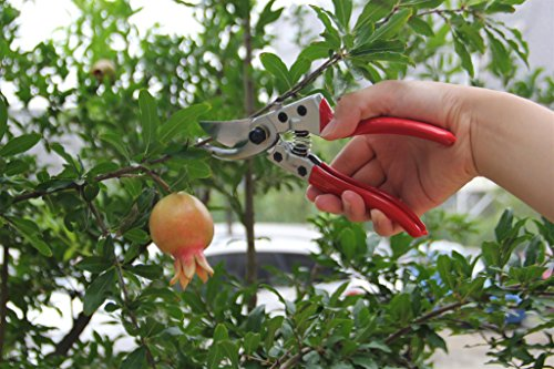 Pruning Garden Scissors Shears In A Leather Case - AsitiGift